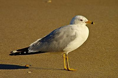 Seagull On The Beach Art Print