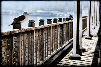 Seagull On The Boardwalk Art Print by Sally Bauer