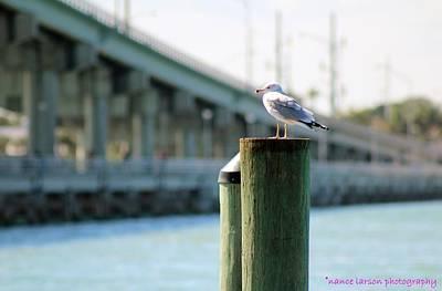 Seagull On The Dock Art Print
