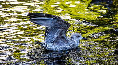 Photograph - Seagull On The Reflective Water by Jenny Rainbow