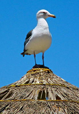 Photograph - Seagull On Watch Duty by Jeff Gater