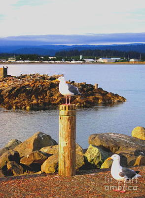 Photograph - Seagull Perch by Marilyn Diaz