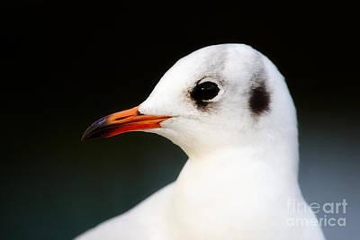 Photograph - Seagull Portrait by Nick  Biemans