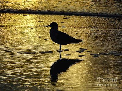 Photograph - Seagull Reflection Sunset by D Hackett