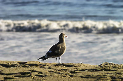 Photograph - Seagull Rod by Wes Jimerson