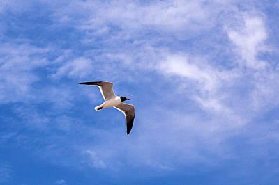 Photograph - Seagull by Sennie Pierson