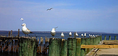 Photograph - Seagull Sentries by Jeanne Donnelly
