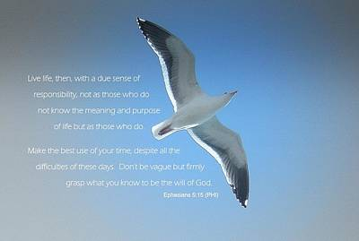 Seagull Soaring W/ Scripture Art Print