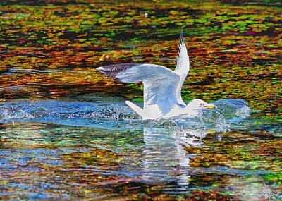 Photograph - Seagull Splashdown by Greg Norrell