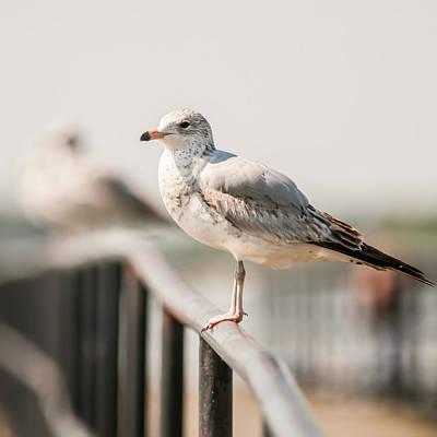 Photograph - Seagull Standing On Rail by Alex Grichenko