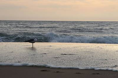 Photograph - Seagull Standing Watch At Sunrise by Robert Banach