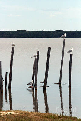 Photograph - Seagull Sticks by Mary Mikawoz