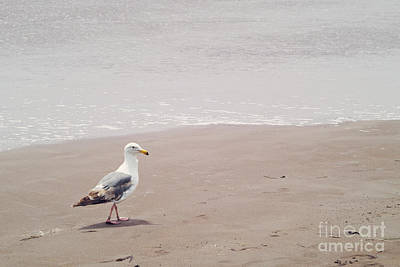 Photograph - Seagull Strolling by Cindy Garber Iverson