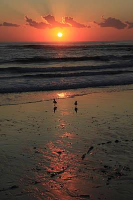 Photograph - Seagull Sunrise by Noel Elliot