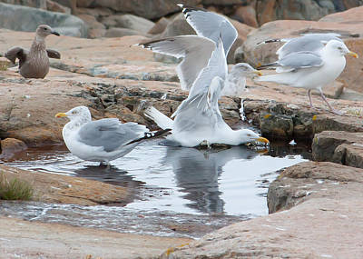 Photograph - Seagull Swimming Pool - Acadia by Kirkodd Photography Of New England