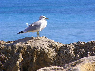 Art Print featuring the photograph Seagull by Artists With Autism Inc