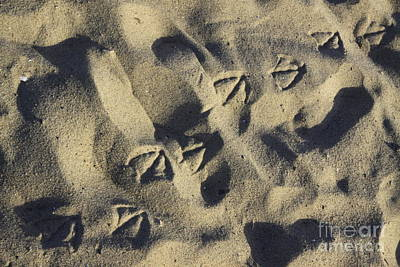 Seagull Tracks Art Print