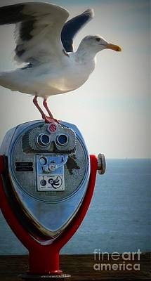 Photograph - Seagull Viewpoint  by Susan Garren