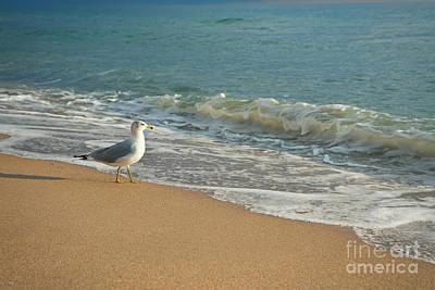 Seagull Walking On A Beach Art Print by Sharon Dominick