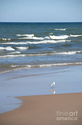 Photograph - Seagull Walk Along The Beach by Jackie Farnsworth