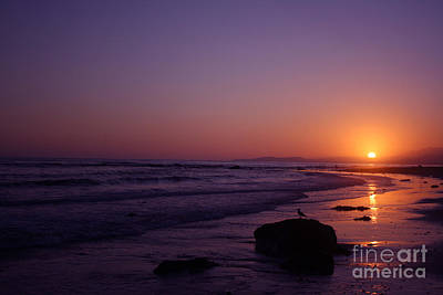 Photograph - Seagull Watching The Sunset Carpinteria State Beach by Ian Donley