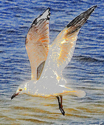 Flying Seagull Painting - Seagull Flying  by David Lee Thompson