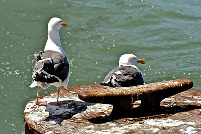 Photograph - Seagulls Against Rust by SC Heffner