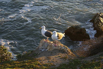 Ocean Side Digital Art - Seagulls Aka Pismo Poopers by Barbara Snyder
