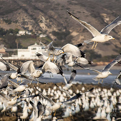 Beach Photograph - Seagulls And More Seagulls Taking Off From The Beach Nature Wildlife Fine Art Photograph Print by Jerry Cowart