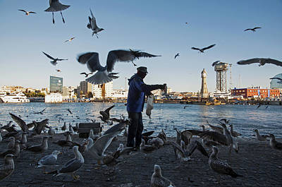 Photograph - Seagulls At Barcelona Harbor by Dubi Roman