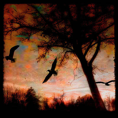 Seagulls At Dusk Art Print by Gothicrow Images