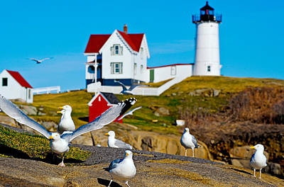 Seagulls At Nubble Lighthouse, Cape Art Print by Panoramic Images