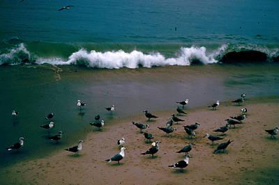 Photograph - Seagulls At Seashore by Donna Walsh
