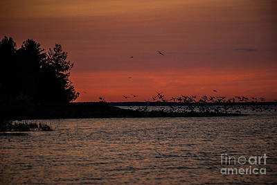Photograph - Seagulls At Sunset by Grace Grogan