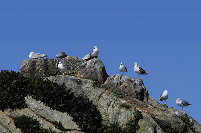 Photograph - Seagulls by Bonnie Fink