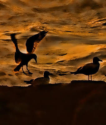 Photograph - Seagulls By 3 by Dale Stillman