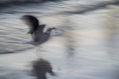 Dancing On The Beach Photograph - Seagull Feasting by Robert VanDerWal