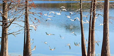 Trees And Lake Photograph - Seagulls Flying Over Water With Reflections by Rebecca Brittain