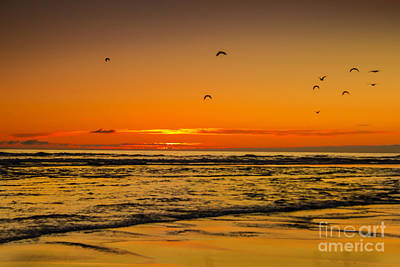 Photograph - Seagulls Flying Sunset by Robert Bales