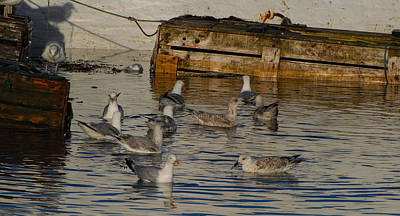 Portmagee Wall Art - Photograph - Seagulls Gather For Breakfast by Dave Byrne
