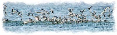 Photograph - Seagulls In A Feeding Fenzy by Dan Friend