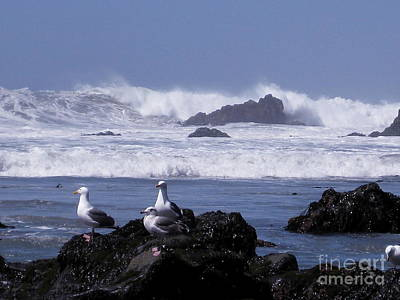 Photograph - Seagulls In Big Sur by Theresa Ramos-DuVon