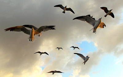 Photograph - Seagulls In Flight 2 by Sheri McLeroy