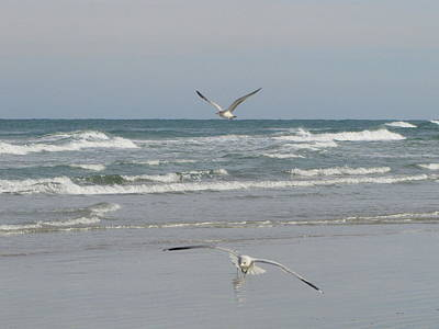 Photograph - Seagulls In Flight New Smyrna Beach by RobLew Photography