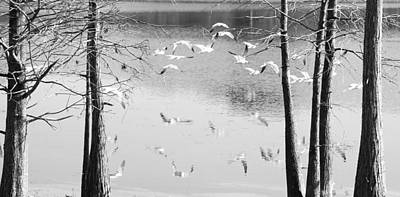 Trees And Lake Photograph - Seagulls In Flight With Reflection And Trees by Rebecca Brittain