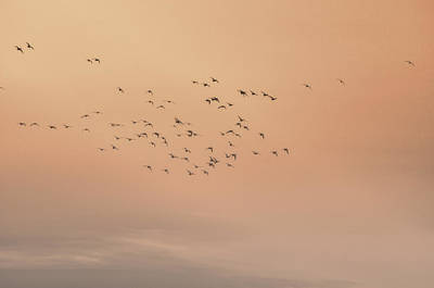 Photograph - Seagulls In The Mist by Beth Sawickie