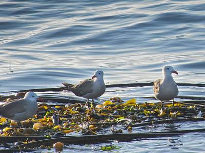 Photograph - Seagulls In Victoria Bc by Natalie Rotman Cote