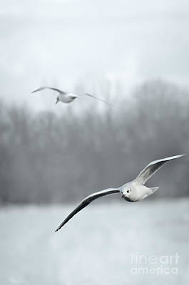 Photograph - Seagulls by Jelena Jovanovic