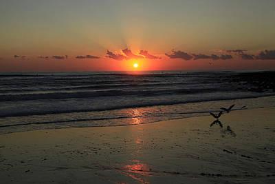 Photograph - Seagulls Landing At Dawn by Noel Elliot