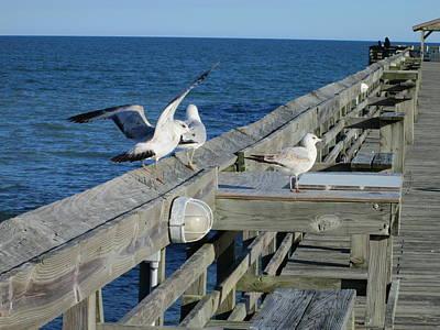 Photograph - Seagulls by Nelson Watkins